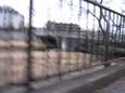 柵の向こう河川敷揺れる枯れ草曇り空
